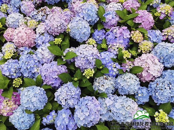 来画境,赏一场花开绚烂